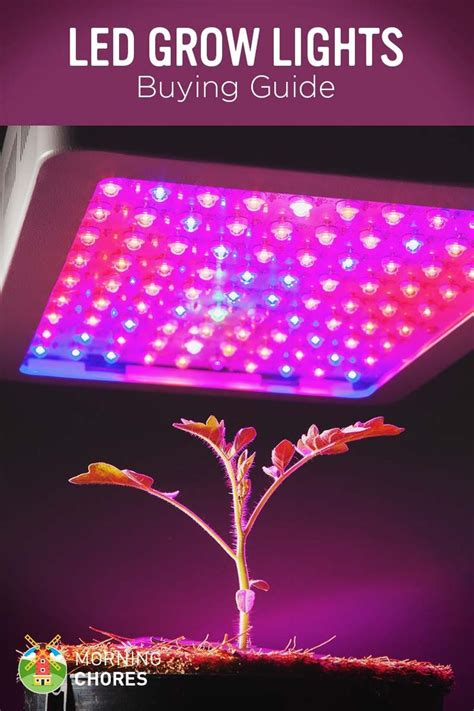 Best Indoor Grow Lights by Best 25 Grow Lights Ideas On Grow Lights For