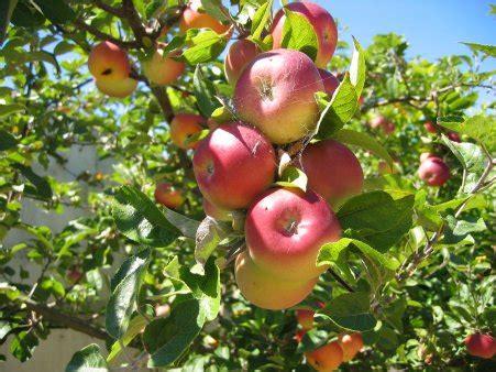 trees fruit basket flowerland