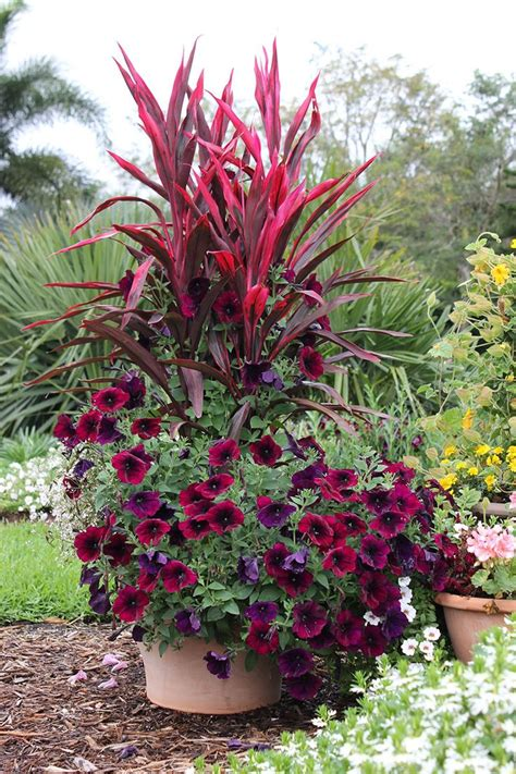 25 trending container plants ideas on potted