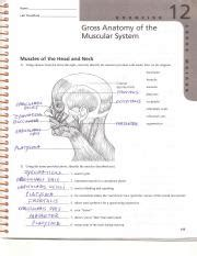 gross anatomy of the muscular system review sheet 12 lab ex 12 review sheet answers0001 name lab time date gross anatomy of the muscular system
