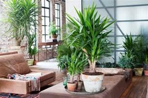 wasserhähne küche welche pflanzen eignen sich für den innenraum