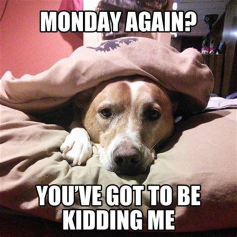 Monday Funny Meme - funny meme of the day 11th april 2016
