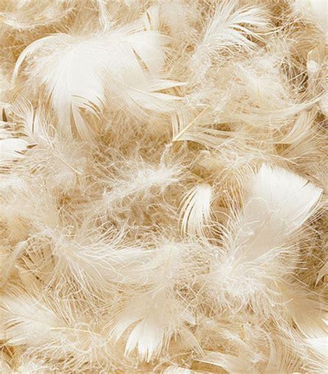 canap plume d oie fourniture tapissier plume supérieure d 39 oie canard