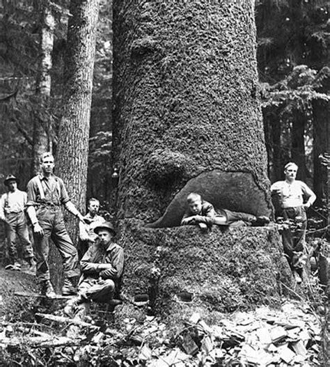 spokane based lumber workers industrial union iww