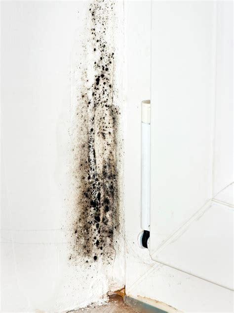 mold  walls hgtv