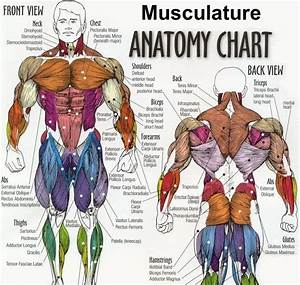 Team Indian Bodybuilding  Study Parts Of Your Muscle
