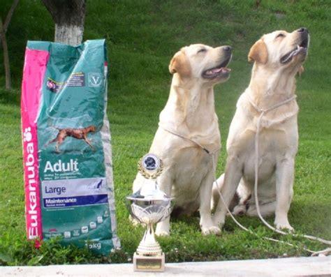 Aldamity Labradors
