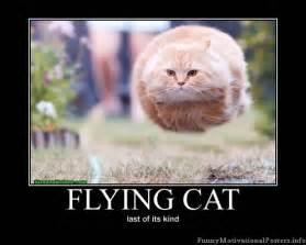 cat poster picture clip demotivational cat posters