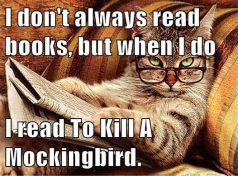 To Kill A Mockingbird Cat Meme - 123 best images about to kill a mockingbird on pinterest to kill a mockingbird bobs and book nerd