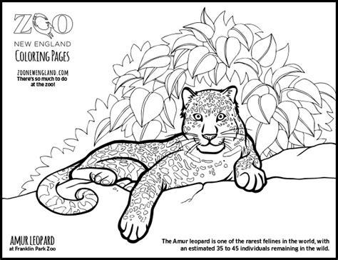 Amur Leopard Clipart Coloring Page