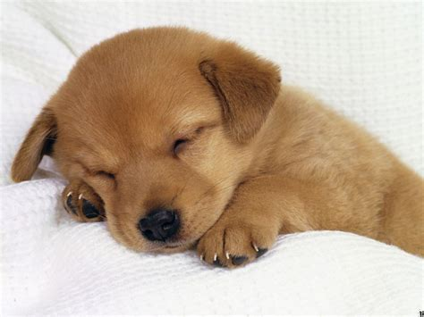 Pitchers Of Puppies Cutepuppydogspuppiespictures91