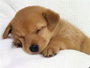 pitchers of puppies | cute-puppy-dogs-puppies-pictures-91 ...
