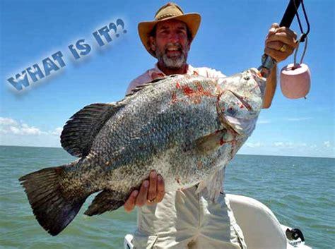 Name That Fish Jurrasic Panfish Edition