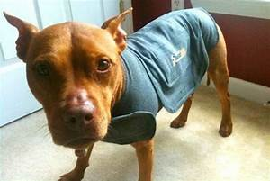 does the thundershirt really work