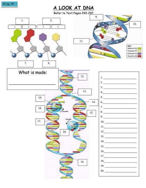 1000+ Images About Biology  Dna, Rna & Protein Synthesis On Pinterest  Protein, Science And