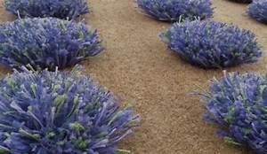 les 25 meilleures idees de la categorie tapis peau ours With tapis de sol avec canapés fabrication française