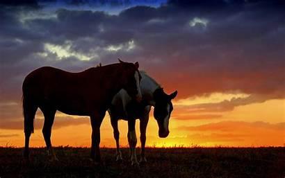 Horse Desktop Paint Sunset