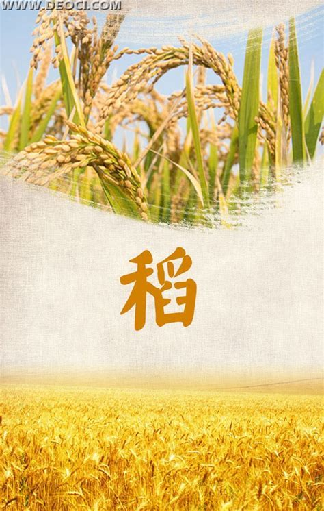 Rice crops posters x banner design template psd   DEOCI