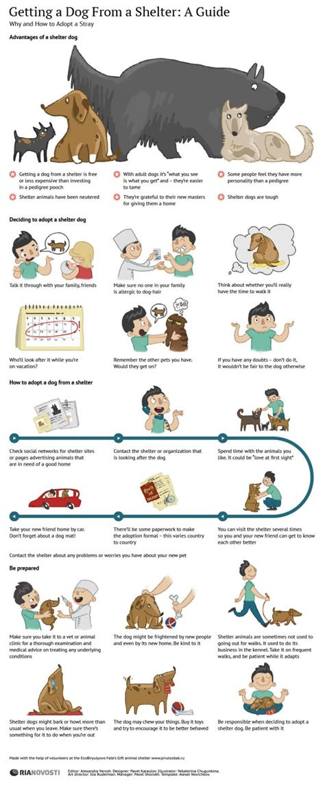 guide  adopting  shelter dog daily infographic