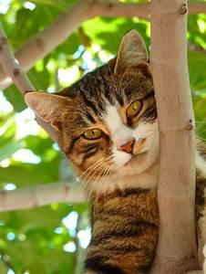 More For Cats Kratzbaum : feline immunodeficiency virus fiv pethelpful ~ Whattoseeinmadrid.com Haus und Dekorationen