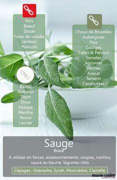 cuisiner la sauge reconnaître les plantes aromatiques quel est le nom de