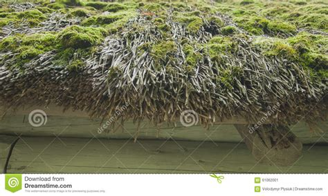 Old Roof Of Reeds, Covered With Moss, Close-up Stock Photo Rv Roof Vent Replacement Parts Red Inn Murfreesboro Tennessee Buy Epdm Rubber Roofing Materials Top Of The Nyc Beacon Supply Locations Austin Rhino Shield Sealing Metal Seams