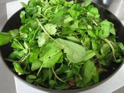 comment cuisiner le cresson comment conserver le cresson plus longtemps trucs et