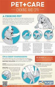 How To Do Dog Cpr