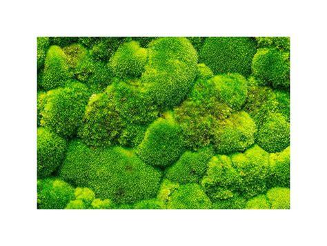 green mood ball moss green wall