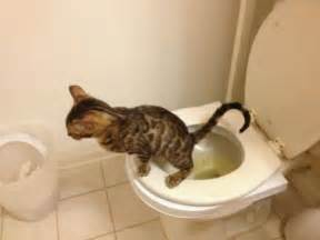 cat toilet toilet trained cat 1funny