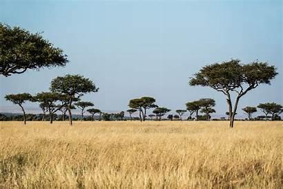 Grassland Savanna Safari Unsplash Habitat Trees Texas