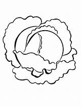 Cabbage Coloring Pages Vegetables Print Recommended sketch template