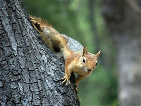 ks living  animals   woodland habitat