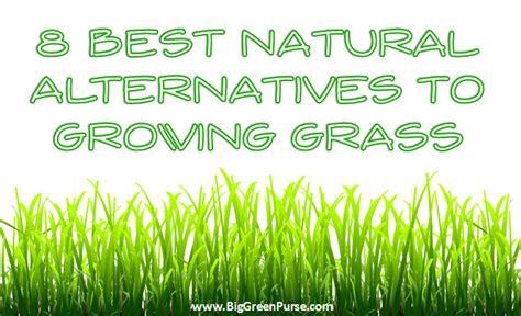 8 Best Natural Alternatives to Growing Grass