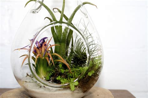 air garden plants abounding blooms for mom on a budget the exchange