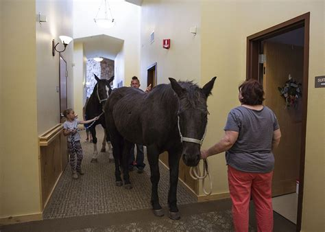 horses visit seniors  assisted living center