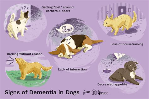 senior dementia  dogs professional pet care