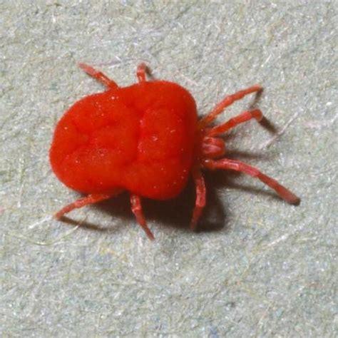 signification araignee dans une maison lutter contre les araign 233 es rouges jardinage