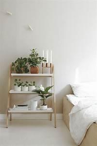 132 best zimmerpflanzen images on pinterest bonsai for Zimmerpflanzen schlafzimmer