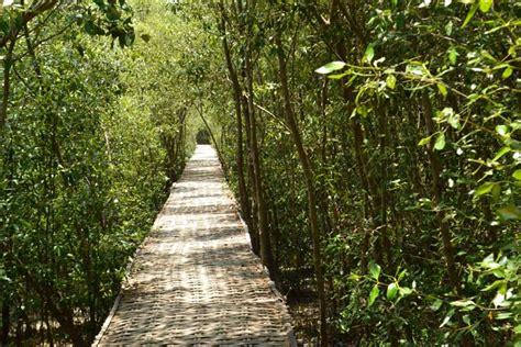 hutan mangrove wonorejo