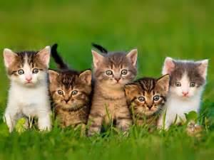 Résultat d'images pour chats