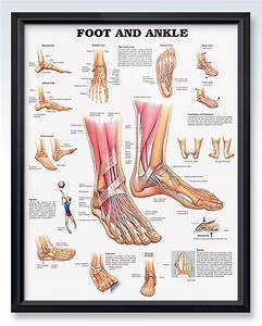Foot And Ankle Chart 20x26