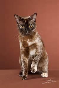 unique cats colors