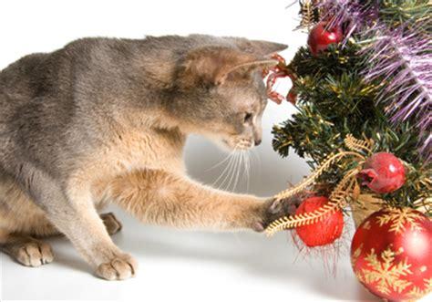blumen de weihnachtsbaum aufstellen und schm 252 cken tipps