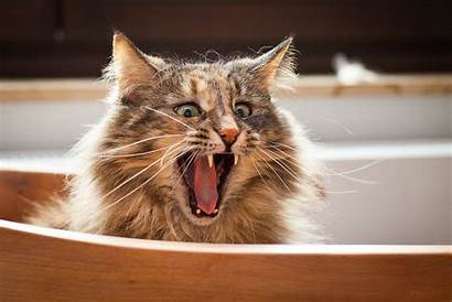 Funniest Cat Cats Ever Funny