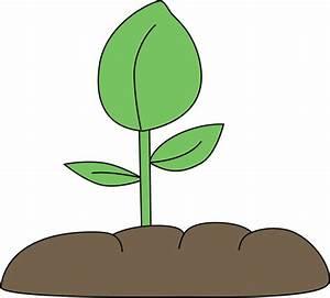 Green Bean Plant Clipart - Clipart Suggest