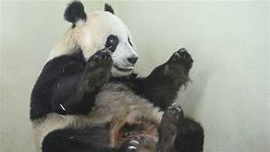 Margaret Thatcher refused to share a flight with a panda ...