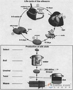 The Diagrams Below Show The Life Cycle Of The Silkworm And