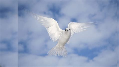 weisser vogel hintergrundbilder weisser vogel frei fotos