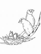 Nest Coloring Bird Pages Printable Getcolorings Getdrawings Drawing Print Place sketch template